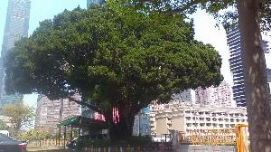 伴慢飛孩子成長25載 80歲榕樹獲全國「評審特別獎」